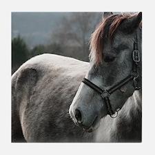 Close-up of Horse Tile Coaster