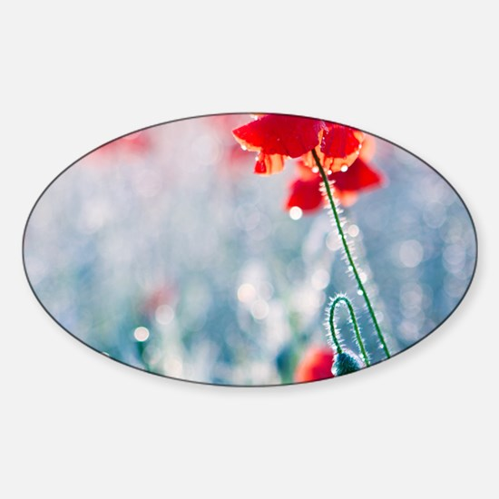 Field of red poppies in flower with Sticker (Oval)