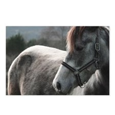 Close-up of Horse Postcards (Package of 8)