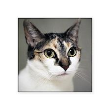 "Close up of cat. Square Sticker 3"" x 3"""