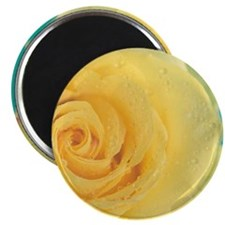 Close up of yellow rose. Magnet