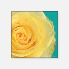 """Close up of yellow rose. Square Sticker 3"""" x 3"""""""