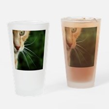 Ginger Cat Drinking Glass