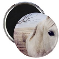 Close up of white horse eye. Magnet