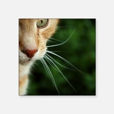 """Ginger Cat Square Sticker 3"""" x 3"""""""