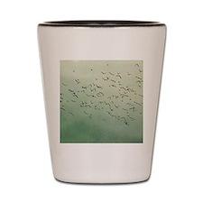 Flying flock of birds in sky by moon. Shot Glass