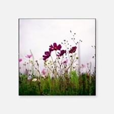 """Cosmos flowers nature field Square Sticker 3"""" x 3"""""""