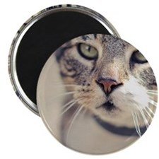 Closeup of face of tabby cat. Magnet