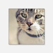 """Closeup of face of tabby ca Square Sticker 3"""" x 3"""""""