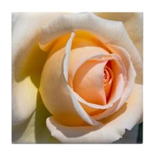 Detail of pale rose. Tile Coaster