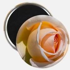 Detail of pale rose. Magnet
