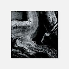 """Dead tree trunk Square Sticker 3"""" x 3"""""""