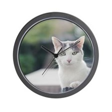 Grey and white cat looking through wind Wall Clock