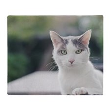 Grey and white cat looking through w Throw Blanket