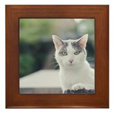 Grey and white cat looking through win Framed Tile