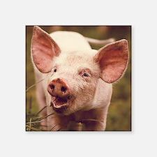 "Happy little piglet. Square Sticker 3"" x 3"""