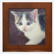 Kitten looking up with big blue eyes. Framed Tile