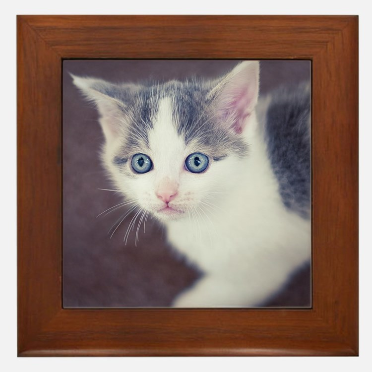 Kitten looking up with big blue eyes. Framed Tile