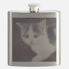 Kitten looking up with big blue eyes. Flask