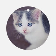 Kitten looking up with big blue eye Round Ornament