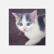 """Kitten looking up with big  Square Sticker 3"""" x 3"""""""