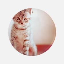 """Kitten walking on floor. 3.5"""" Button"""