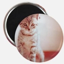 Kitten walking on floor. Magnet