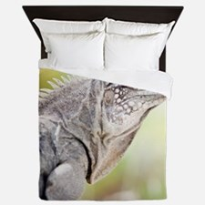 Large green Iguana basking in the sun  Queen Duvet