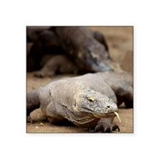 "Komodo dragon with tongue s Square Sticker 3"" x 3"""