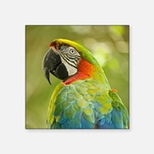 """Green macaw parrot on green Square Sticker 3"""" x 3"""""""