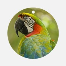 Green macaw parrot on green backgro Round Ornament
