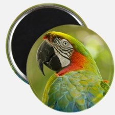 Green macaw parrot on green background. Magnet