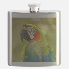 Green macaw parrot on green background. Flask