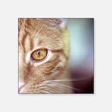 "Orange tabby cat's golden e Square Sticker 3"" x 3"""