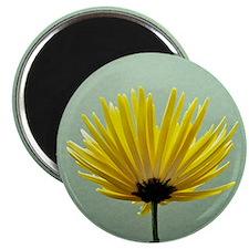 Mums, vintage film color Magnet