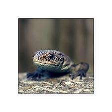 """Little lizard climbing over Square Sticker 3"""" x 3"""""""