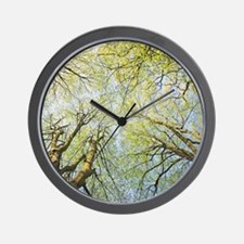 Looking up at tree tops in woodland. Wall Clock