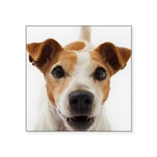 "Jack Russell Terrier Square Sticker 3"" x 3"""