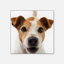 """Jack Russell Terrier Square Sticker 3"""" x 3"""""""