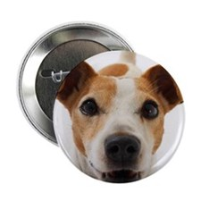 "Jack Russell Terrier 2.25"" Button"