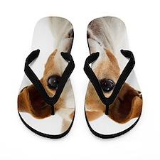 Jack Russell Terrier Flip Flops