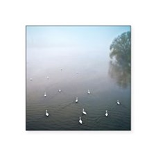 "Lot of swans in fog on rive Square Sticker 3"" x 3"""