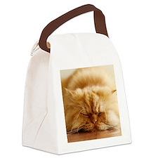 Persian cat sleeping on floor. Canvas Lunch Bag