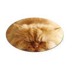 Persian cat sleeping on floor. Oval Car Magnet