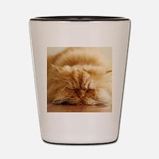 Persian cat sleeping on floor. Shot Glass