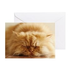 Persian cat sleeping on floor. Greeting Card
