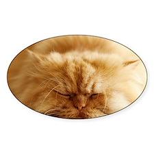 Persian cat sleeping on floor. Decal