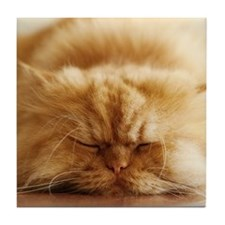 Persian cat sleeping on floor. Tile Coaster