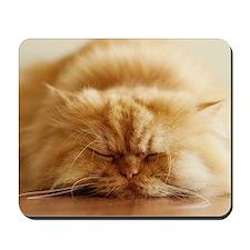 Persian cat sleeping on floor. Mousepad