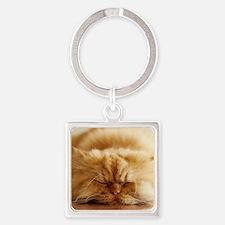 Persian cat sleeping on floor. Square Keychain